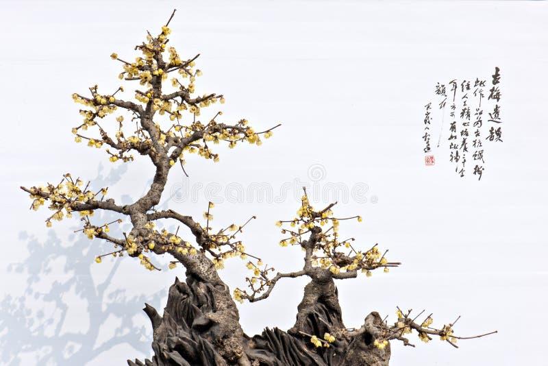 Usine-fleur photos stock