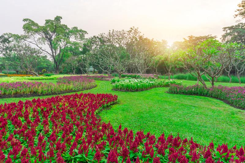 Usine fleurissante colorée sur la pelouse d'herbe verte avec le groupe d'arbres dans un bon jardin d'entretien de soin, sous le s images libres de droits