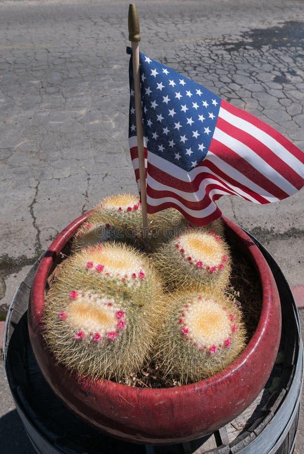 Usine fleurissante de cactus, Jour de la Déclaration d'Indépendance photographie stock libre de droits