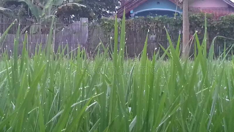 Usine fraîche d'herbe photo libre de droits