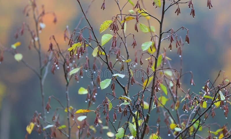 Usine humide avec le congé et les fleurs photographie stock libre de droits
