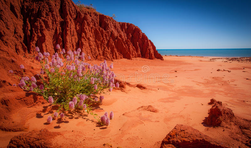 Usine isolée, James Price Point, Kimberley, Australie occidentale image libre de droits