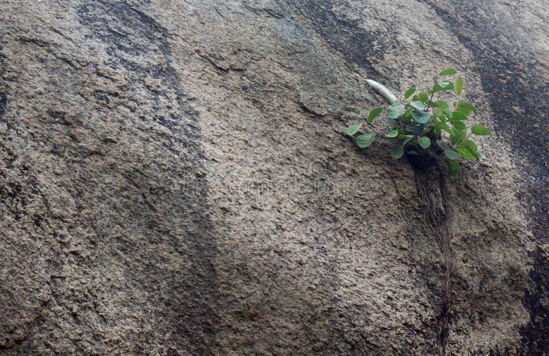 Usine isolée sur la roche photographie stock