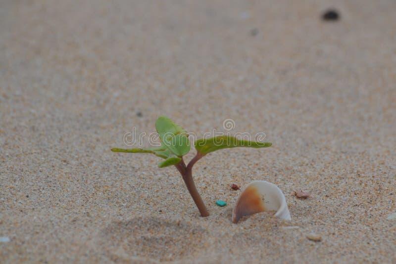 Usine minuscule s'élevant sur une plage photo libre de droits