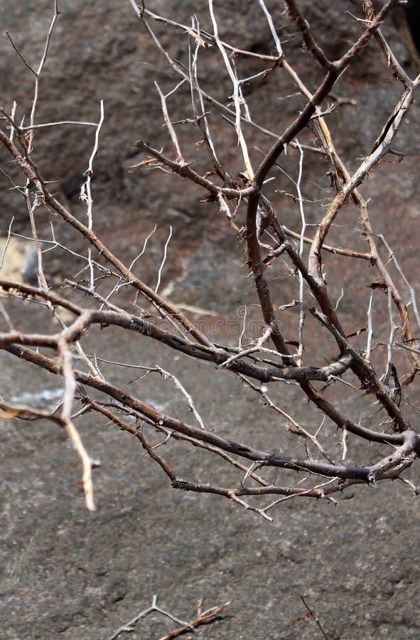 Usine morte avec le fond de texture de pierre de colline photo stock