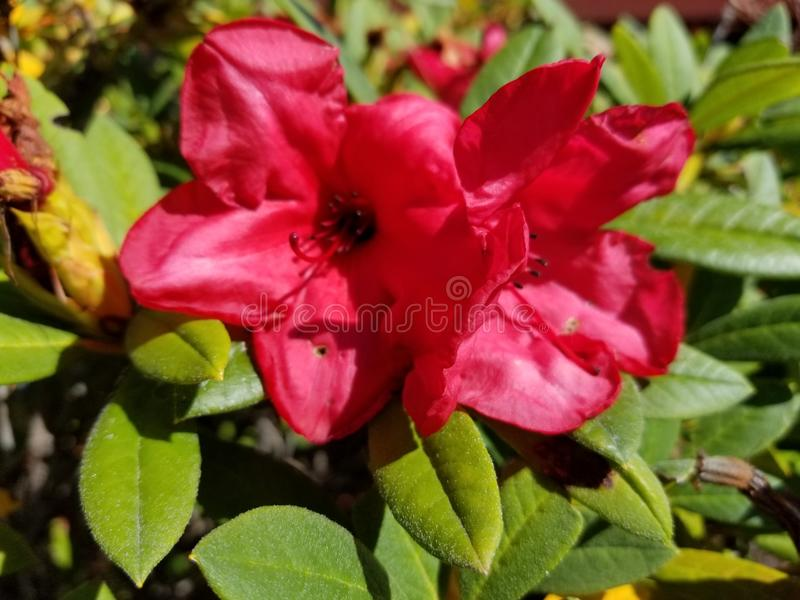 Usine renversante rose photos libres de droits