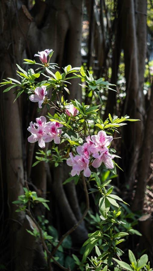Usine rose de fleur en parc image libre de droits