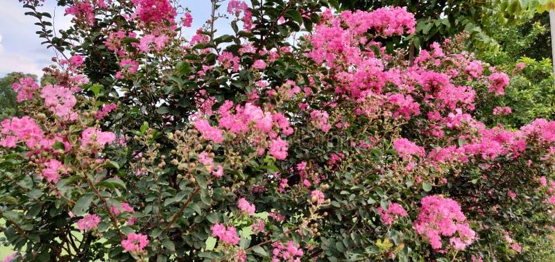Usine rose de fleurs avec le fond impressionnant photographie stock libre de droits