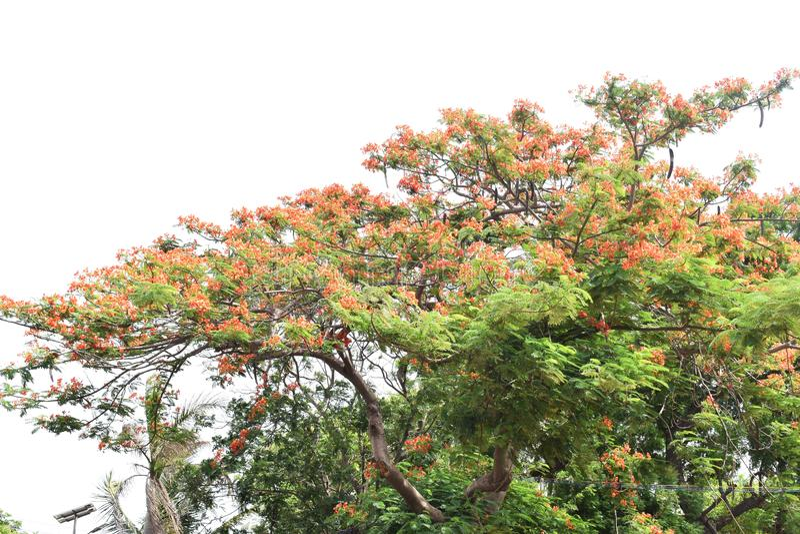 Usine rouge de fleurs images stock