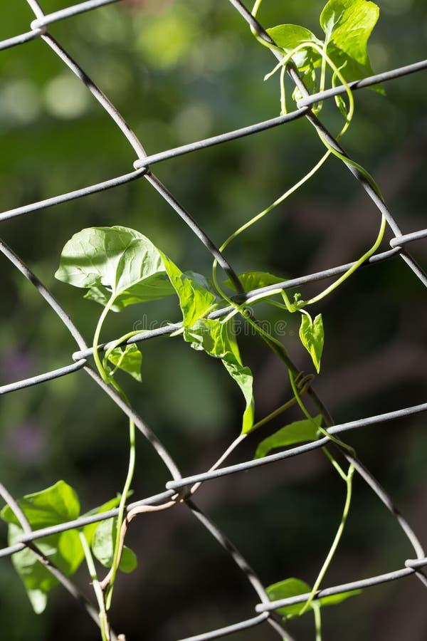 Usine s'élevante sur la barrière à la nature photographie stock