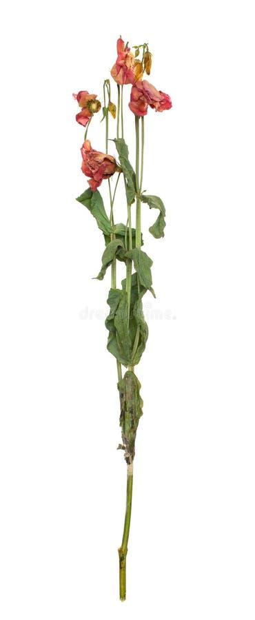 Usine s?che avec des feuilles et plusieurs fleurs sur le blanc photos libres de droits