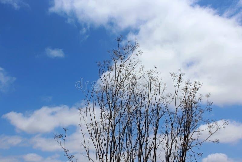Usine sauvage de fenouil et le ciel bleu images libres de droits