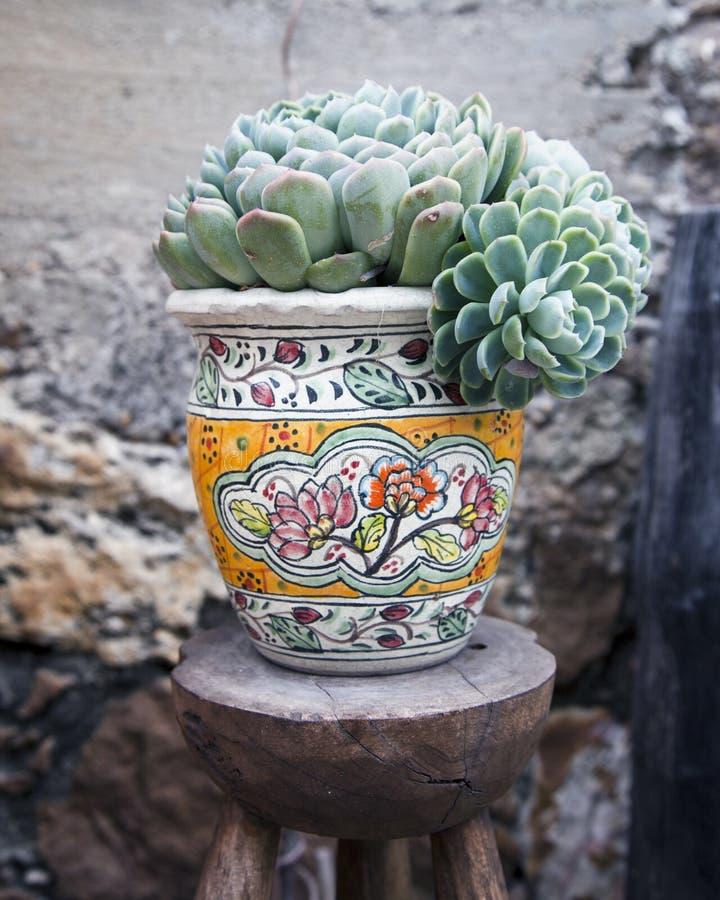 Usine succulente mise en pot photo libre de droits
