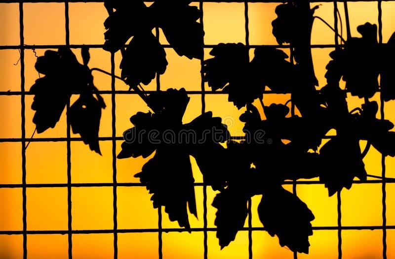 Usine sur la barrière au coucher du soleil photographie stock libre de droits