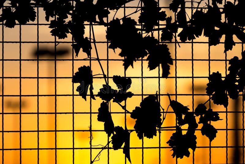 Usine sur la barrière au coucher du soleil photo libre de droits