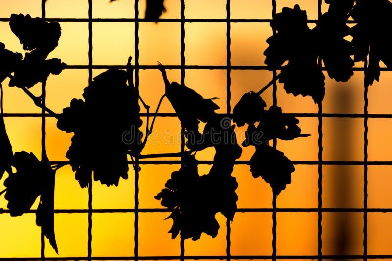Usine sur la barrière au coucher du soleil photos stock