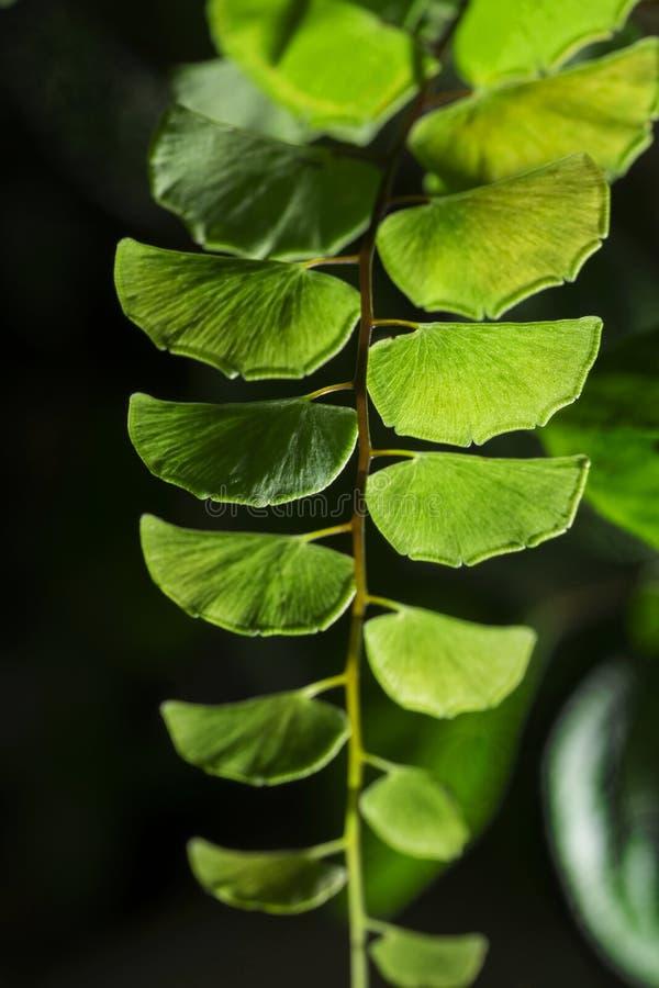 Usine tropicale de feuillage de forêt tropicale de fougère verte de feuilles images libres de droits