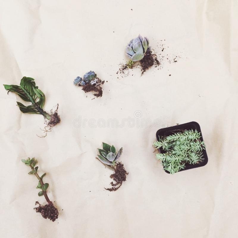 usine/vert//lovelife/home intérieur images stock
