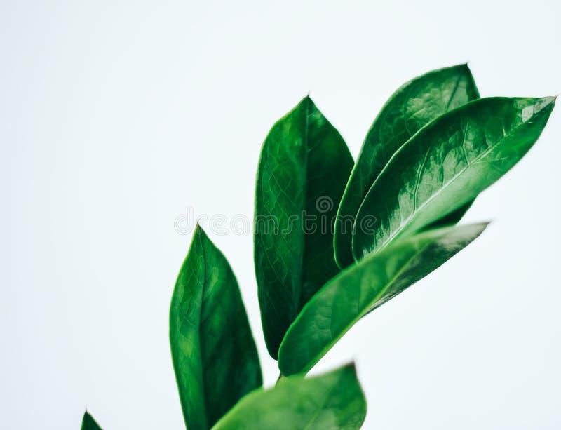 Usine verte de maison de feuille images stock