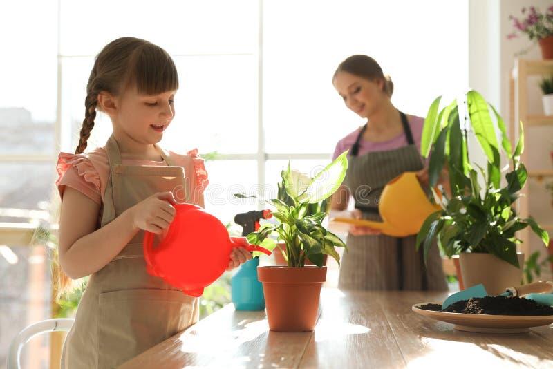 Usines à la maison de arrosage de mère et de fille à la table en bois photographie stock libre de droits