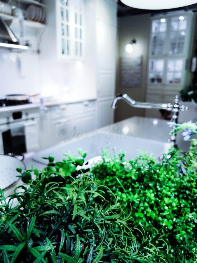 Usines à la maison vertes utilisées dans la cuisson, nourriture dans la cuisine moderne dans des couleurs lumineuses images stock