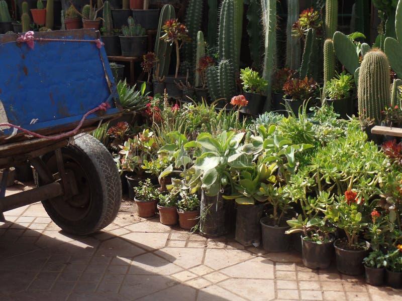 Usines à vendre dans une place du marché à Marrakech, Maroc image libre de droits