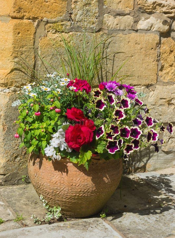 Usines colorées dans un pot de terre cuite, y compris le bégonia, pétunia, images stock