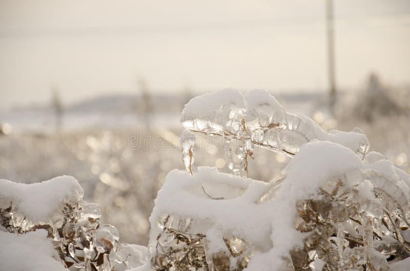 Usines couvertes en glace photo libre de droits
