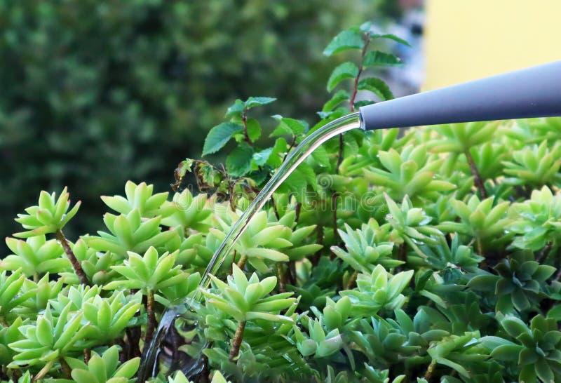 Usines d'arrosage avec une bo?te d'arrosage Concept de jardinage photos libres de droits