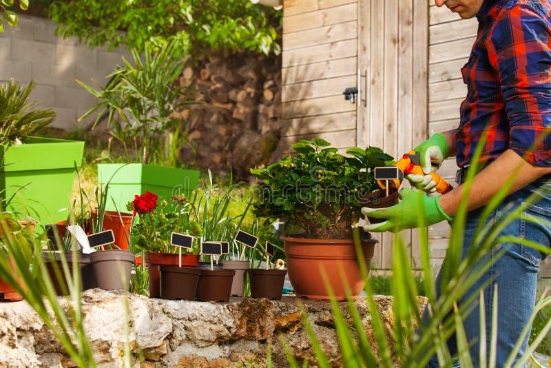 Usines d'arrosage de jardinier utilisant l'arroseuse de main image stock