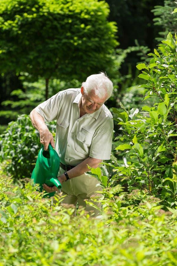 Usines d'arrosage supérieures de jardinier images libres de droits