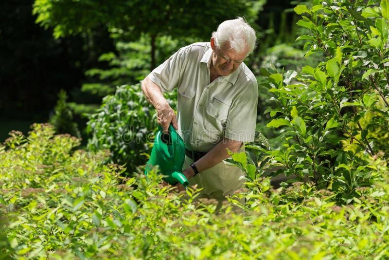 Usines d'arrosage supérieures de jardinier image libre de droits