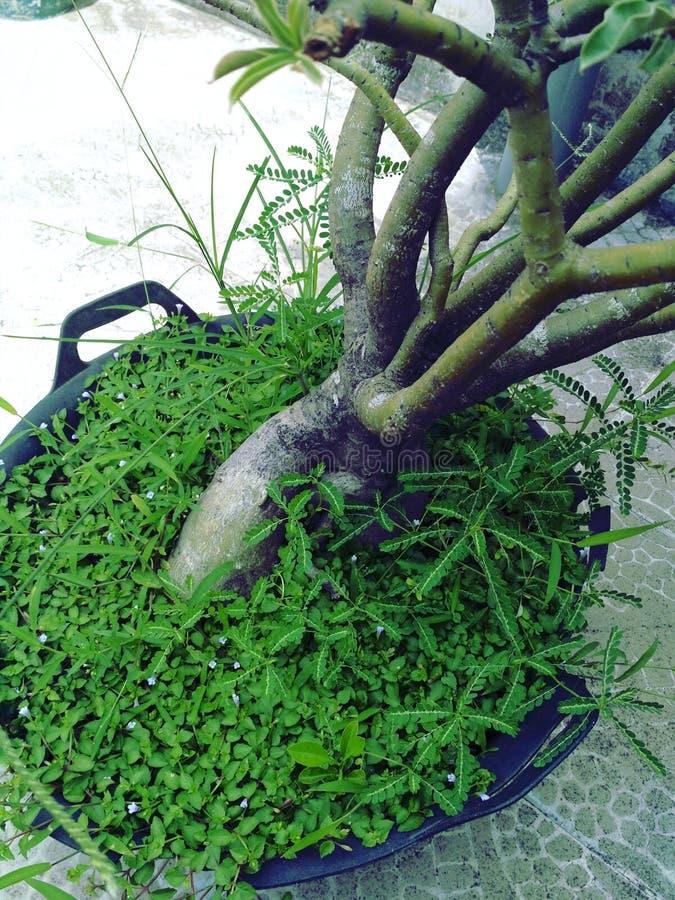 Usines d'herbe verte images libres de droits
