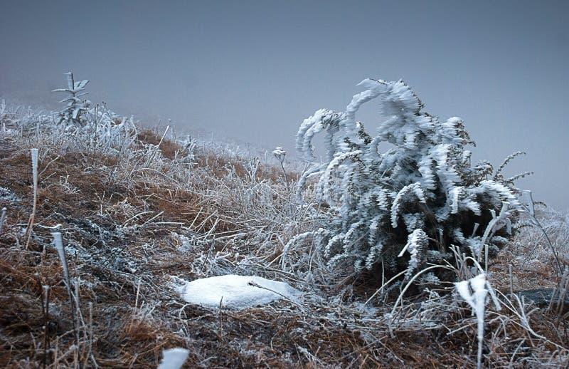 Usines d'hiver photo stock