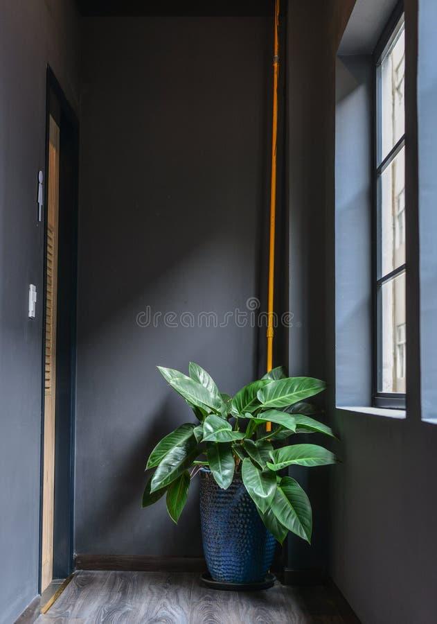 Usines d'intérieur dans un intérieur confortable moderne photos libres de droits