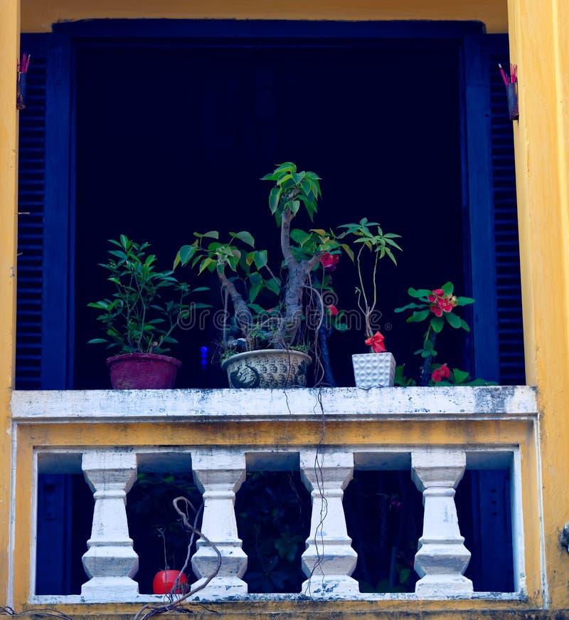 Usines dans la fenêtre colorée, Hoi An, Vietnam photo stock