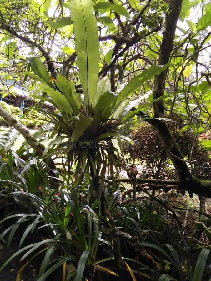 Usines dans la forêt tropicale image stock