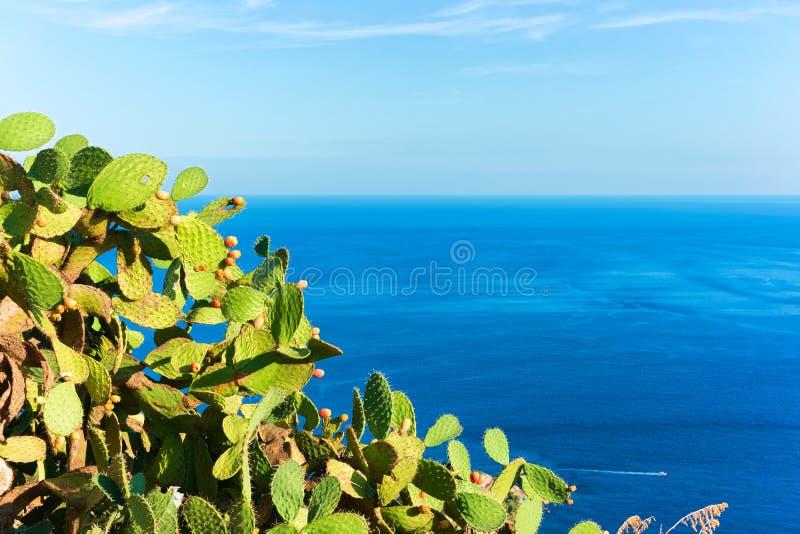 Usines de cactus en Taormina et mer Méditerranée Sicile photos stock