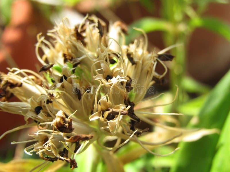 Usines de fleur de nature photos stock