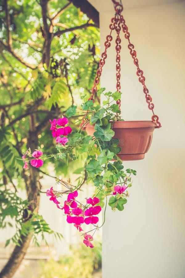 Usines de jardin accrochant photos libres de droits