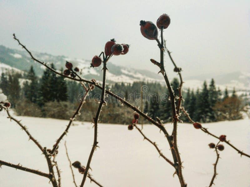 Usines de neige originales images libres de droits