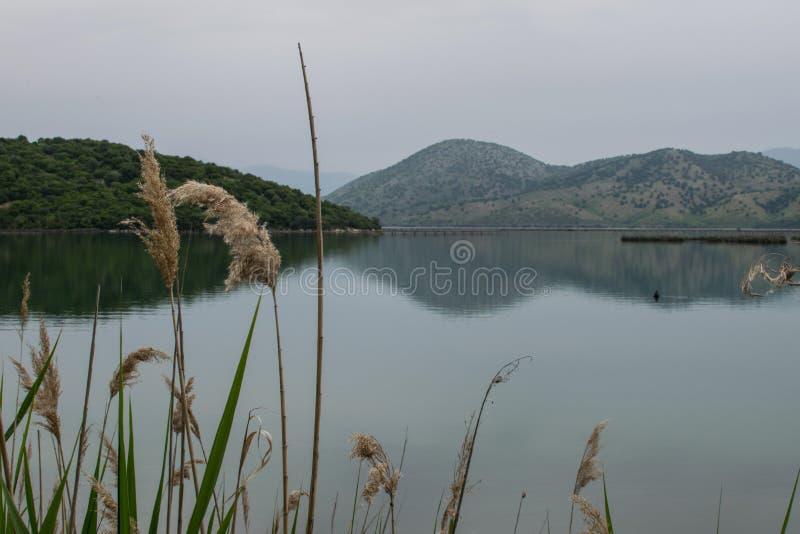 Usines de ondulation à un lac images libres de droits