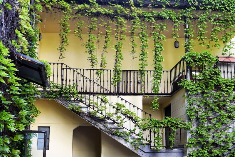 Usines de plante grimpante de lierre autour des escaliers et du balcon photo stock