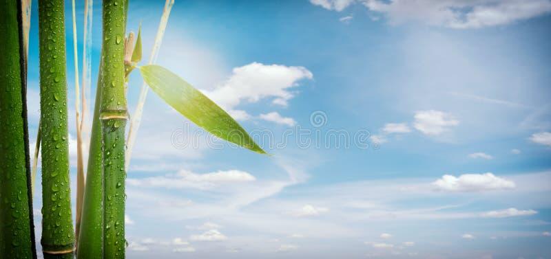Usines en bambou sur un fond de ciel image stock