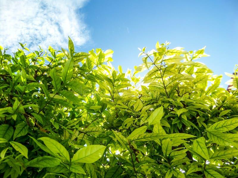 Download Usines Et Arbres Autour Dans Le Jardin à La Maison Photo stock - Image du herbe, nature: 56482344