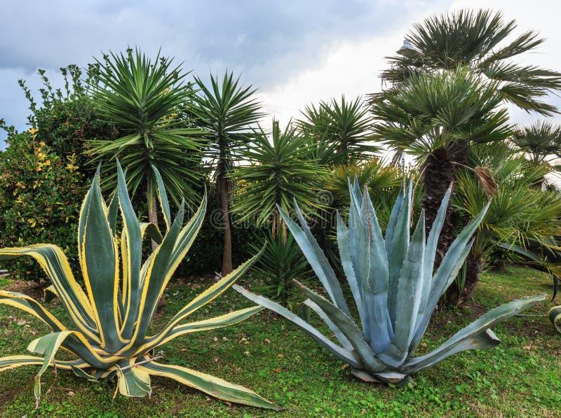 Usines et palmiers d'aloès photographie stock