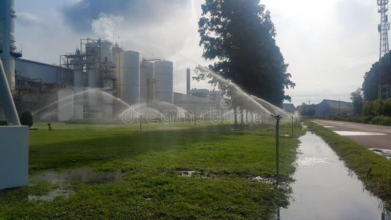 Usines et pelouses d'arrosage d'arroseuse photos libres de droits