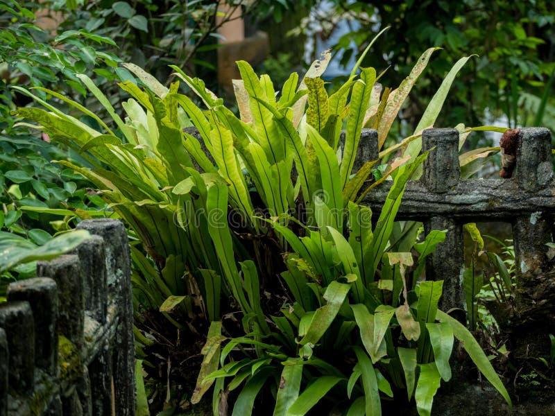 Usines et plante tropicale de barrière à l'arrière-cour images libres de droits