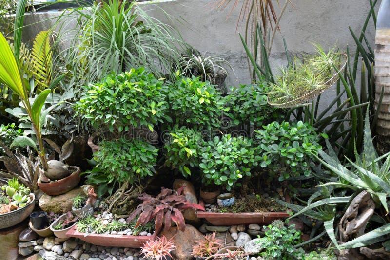 Usines exotiques montrées dans les lieux de M. Résidence du ` s de Victoria de dela d'Alexandre chez Matanao, Davao del Sur, Phil photos stock