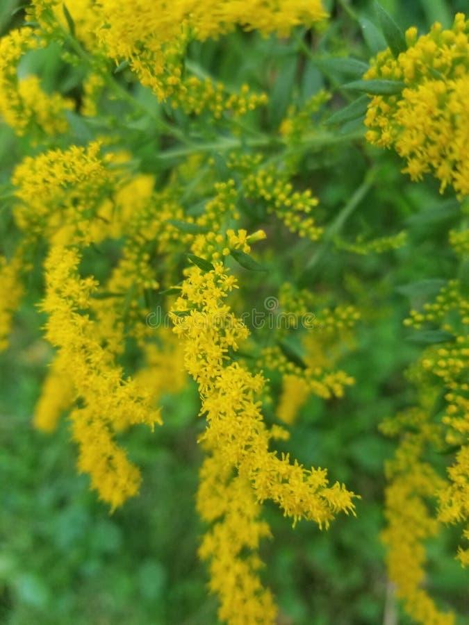 Usines jaunes photos stock